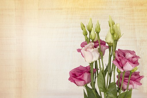 Pink Lisianthus, Floral Greeting Card, Flower, Flora
