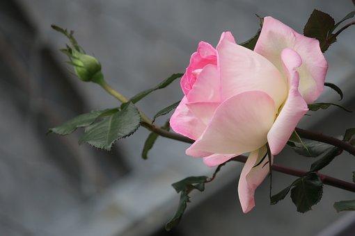 Hong Kong, Charming, Have Thorns, Wins Eye, Touching