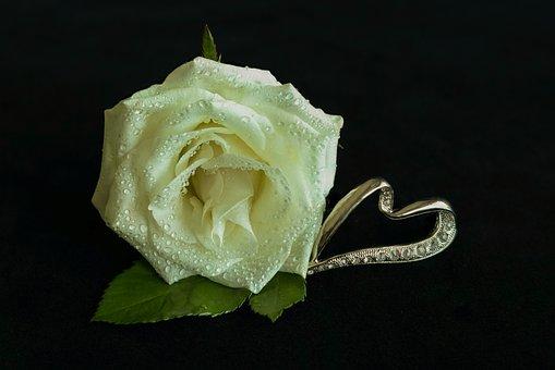 White Rose, Heart, Jewellery, Noble, Drip, Flower, Leaf