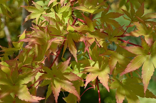 Leaf, Nature, Flora, Outdoors, Fall, Leaves, Yellow