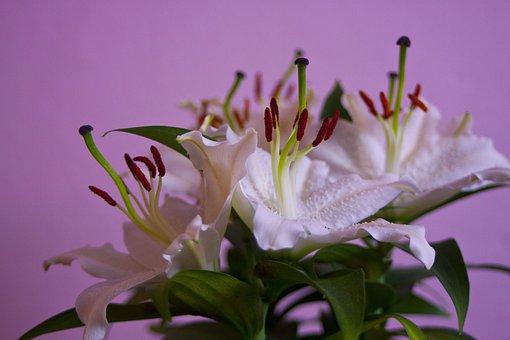 Flower, Nature, Plant, Floral, Leaf, Garden, Closeup