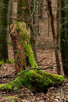 Wood, Moss, Nature, Tree, Tribe, Bark, Autumn, Season