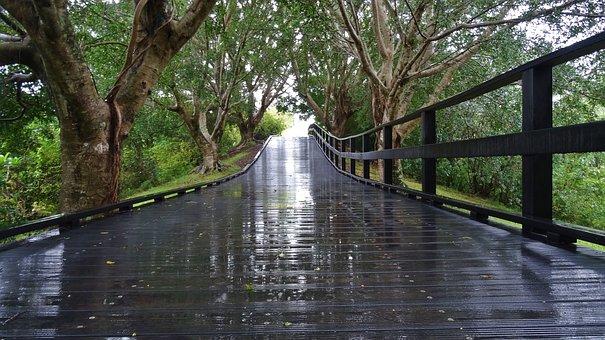 Nature, Wood, Water, Bridge, Tree, Reflection, Footpath