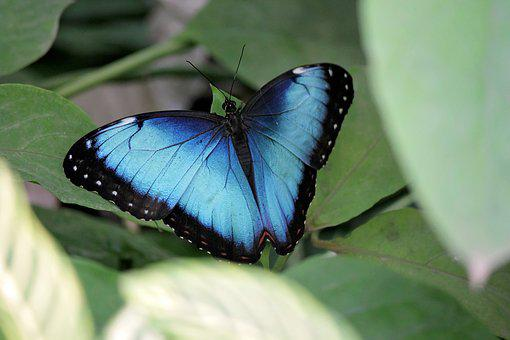 Butterflies, Bug, Nature, Outdoor, Summer, No Person