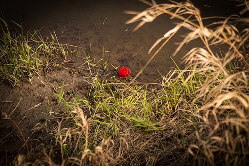 Rose, Water, River, Pond, Alone, Red, Flower, Swimm