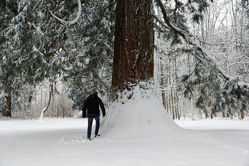 Snow, Winter, Cold, Wood, Frost, Tree, Frozen, Season