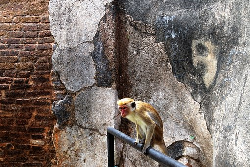 Sigiriya, Sri Lanka, Nature, Stone, Lake Dusia