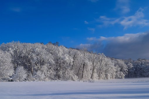 Snow, Trees, Winter, Cold, Frost, Nature, White, Season