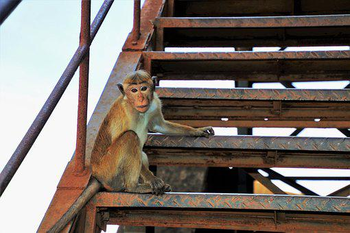 Monkey, Primates, Travel, Stairs, Stage
