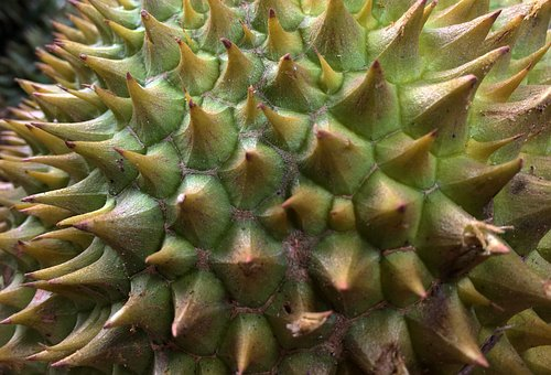 Durian, King Of Fruits, Thorn, Prickly, Tropical