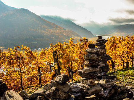 Autumn, Nature, Landscape, Mountain, Tree, Vineyard