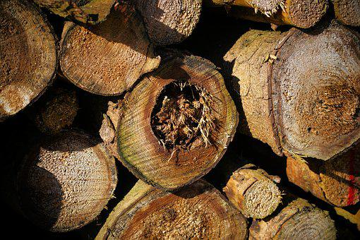 Section, Dry, Wood, Firewood, Tribe, Nature, Background