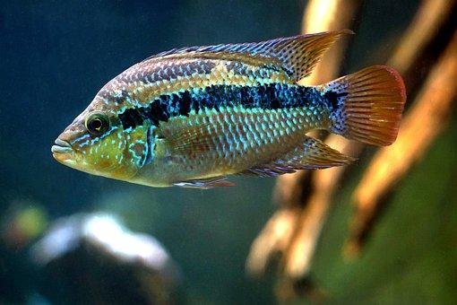 Fish, Underwater, Nature, Water, Aquarium, Wildlife