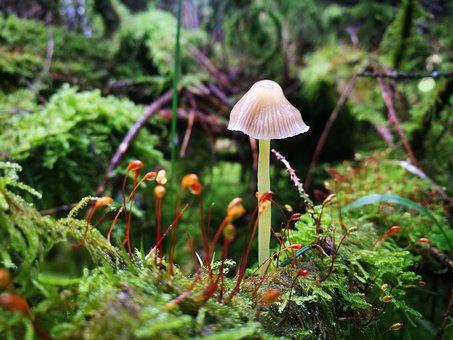 Nature, Mushroom, Plant, Wild, Green, Roadside, Moss