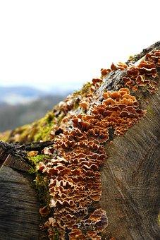 Nature, Tree, Wood, Mushroom, Death, Annual Rings