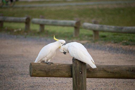 Bird, Nature, Wildlife, Animal