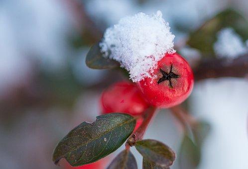 Nature, Snow, Winter, Season, Cold, Frost, Small, White