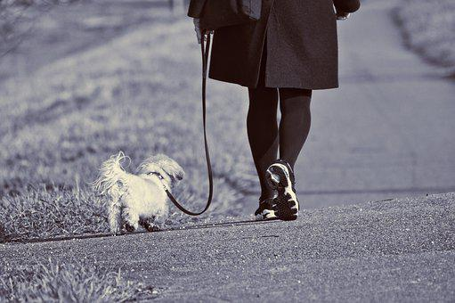 Woman, Walking, Dog, Leash, Leg, Foot, Shoe, Active