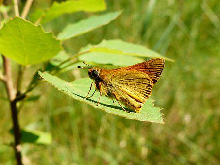 Nature, Butterfly Day, Insect, Summer, Animals