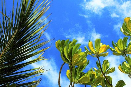 Nature, Maldives, Paradise, Holiday, Tree, Plant
