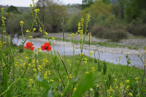Flower, Nature, Area, Plant, Chan, River