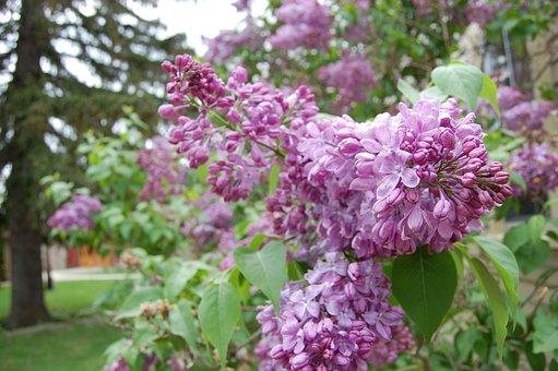 Flowers, Plant, Garden, Natural, Wood, Flowering, Shrub