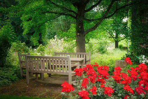 Flower, Garden, Nature, Tree, Park, Bank, Seating Area