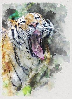 Siberian Tiger, Tiger, Head, Animal, Wild, Wildlife