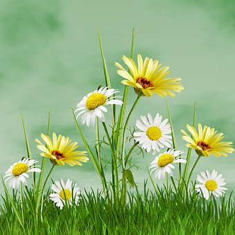 Plant, Nature, Flower, Summer, Flowers, Margaritas, Sky