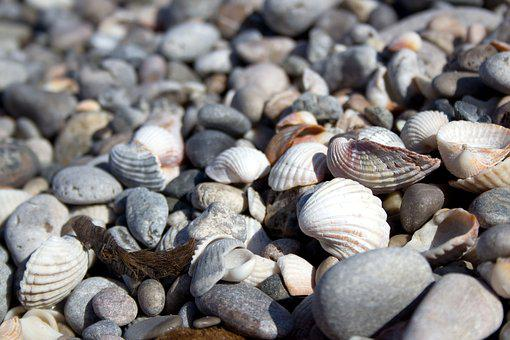 Shell, Beach, Stones, Sea, Holiday, Seashell, Coast