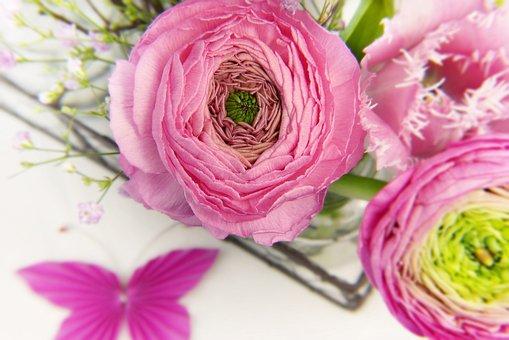 Ranunculus, Blossom, Bloom, Tulip, Pink, Vase