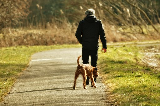 Man, Person, People, Walking, Dog, Man With Dog