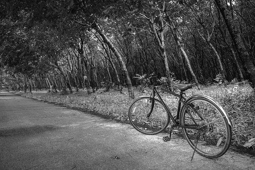 Road, Transportation, Wheel, Monochrome, Tree, Wood