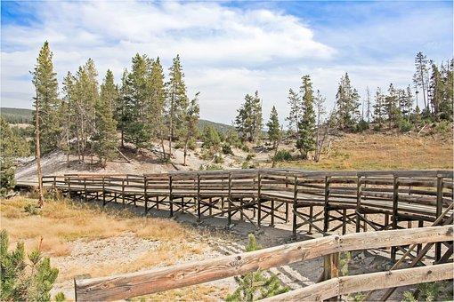 Wood, Nature, Landscape, Woods, Yellowstone