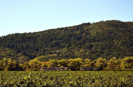 Landscape, Hill, Nature, Agriculture, Wine, Vineyard