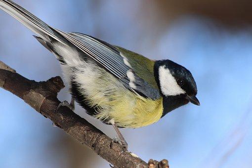 Bird, Living Nature, Outdoors, Nature, Animals