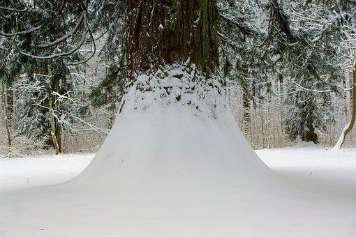 Winter, Snow, Cold, Frost, Frozen, Season, Tree, Nature