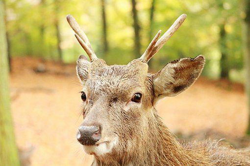 Nature, Animal World, Mammal, Animal, Hirsch, Wild, Fur