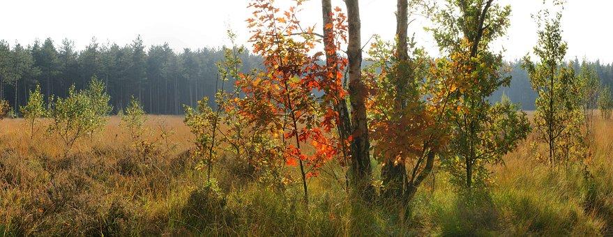 Nature, Tree, Wood, Landscape, Fall, Autumn, Leafs