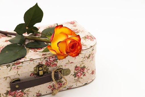 Rose, Rose Bloom, Romance, Love, Affection, Romantic