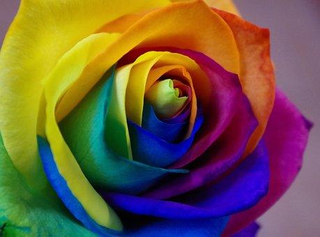 Affection, Flower, Petal, Rose, Love, Flowers, Floral