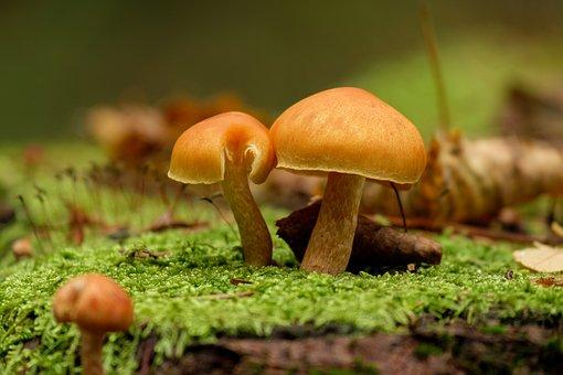 Mushrooms, Mushroom, Amanita, Nature, Mosses, Autumn