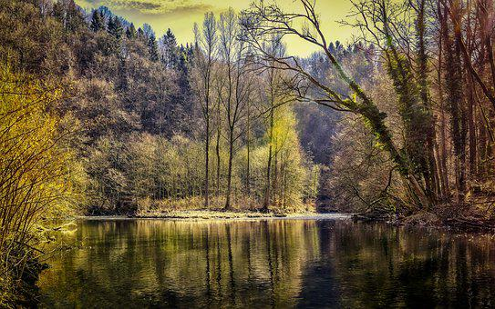 Forest, Lake, Nature, Trees, Water, Pond