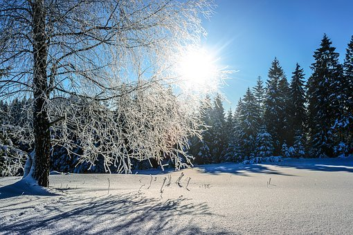 Snow, Winter, Frost, Cold, Tree, Landscape, Weather