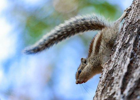 Nature, Wildlife, Tree, Outdoors, Wood, Squirrel