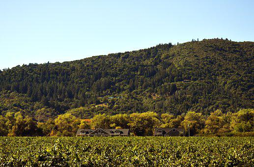 Landscape, Hill, Nature, Agriculture, Wine, Vineyard