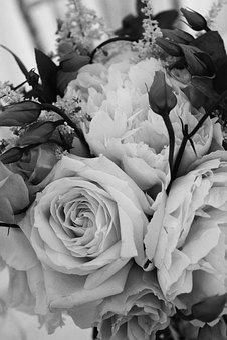 Flower, Rose, Love, Romance, Wedding, Romantic, Flora