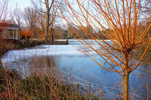 Willow, Golden Willow, Tree, Pond, Shore, Building, Ice