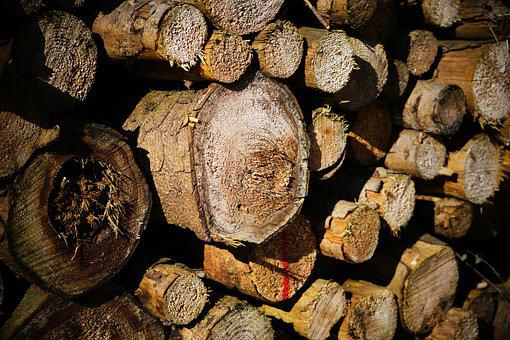 Tribe, Wood, Firewood, Nature, Background, Industry