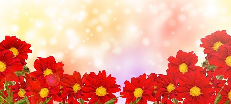 Flower Marguerite, Nature, Flora, Summer, Bright, Plant